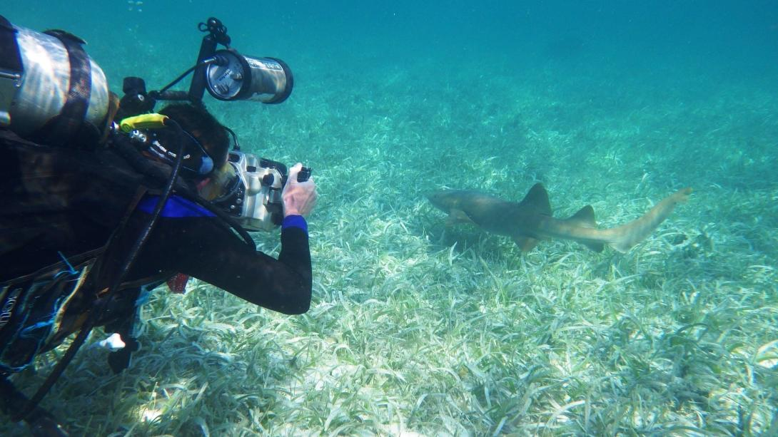 A diver photographs a shark in Belize on one of our summer volunteer opportunities for students.